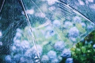 雨の日のアジサイの写真・画像素材[3387449]