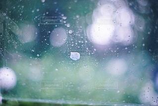 雨の日のアジサイの写真・画像素材[3387447]