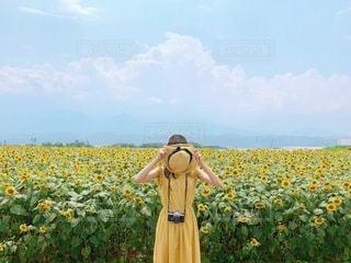 ひまわり畑と女性の写真・画像素材[3404909]