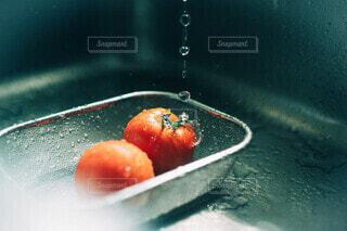 新鮮トマトの写真・画像素材[4657052]