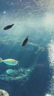 水族館の動画 泡が綺麗の写真・画像素材[4643452]