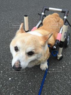 犬の写真・画像素材[283032]