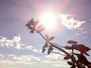 空には雲のグループの写真・画像素材[1103737]