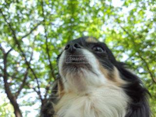 犬,動物,チワワ,屋外,樹木,未来,夢,草木,ちわわ