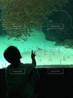魚,後ろ姿,水族館,男の子,憧れ,物思い,6歳