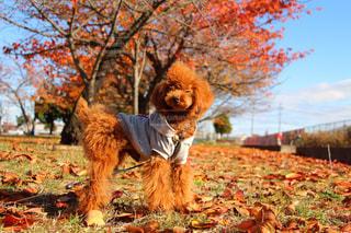 草の中に立っている犬の写真・画像素材[973478]