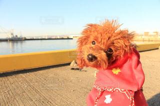 近くに水の体の犬のアップの写真・画像素材[973504]