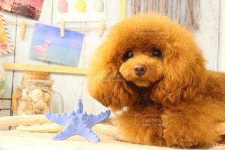 テーブルの上に座っている犬の写真・画像素材[2361925]
