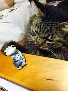 猫の写真・画像素材[283179]