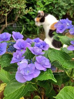 猫の写真・画像素材[574242]
