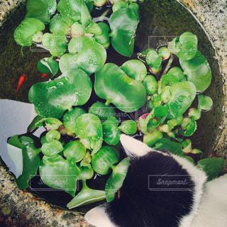猫の写真・画像素材[574270]