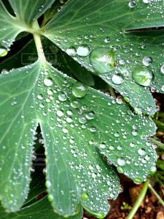 雨の写真・画像素材[576547]