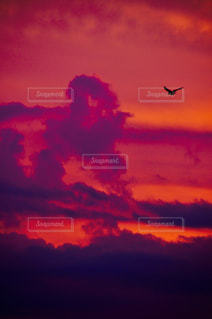 空,夕日,鳥,飛ぶ,夕陽,飛翔