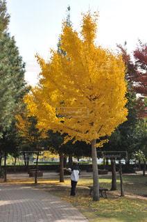運動の秋の写真・画像素材[1637862]