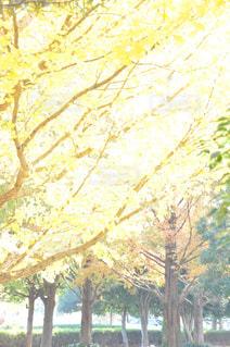 黄金色に輝くの写真・画像素材[1637863]