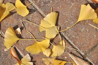 落葉始まるの写真・画像素材[1637868]