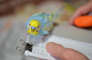 鳥,屋内,手,ペン,セキセイインコ,インコ,手書き,紙,セキセイ,おえかき,パステルレインボー,おうち時間
