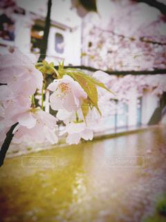 春 - No.420867