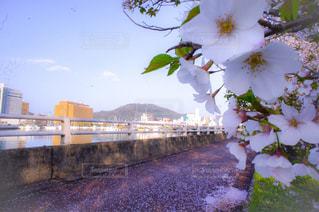 桜,県庁,眉山,映画にもなった眉山