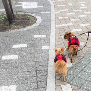 犬の写真・画像素材[297831]