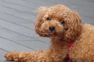 犬の写真・画像素材[297833]