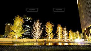 グランフロント大阪前のライトアップされた街路樹の写真・画像素材[1703624]