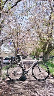 春 - No.441381