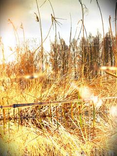 自然,公園,綺麗,水,黄色,田舎,反射