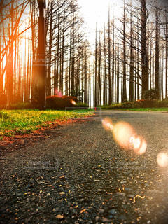 自然,風景,秋,森林,屋外,森,綺麗,黄色,日光,鮮やか,草,樹木,道,地面,明るい,日中
