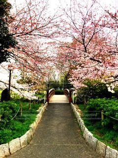 花,春,桜,ピンク,太陽,綺麗,鮮やか,光,明るい,日中