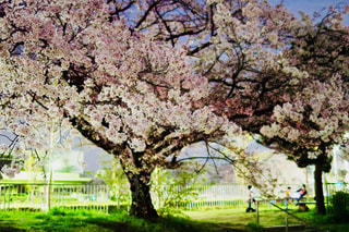 公園の木の写真・画像素材[1367986]