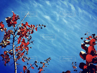 空を飛んでいる鳥の群れの写真・画像素材[1485423]