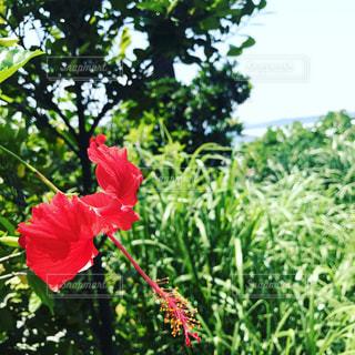 自然の写真・画像素材[464885]