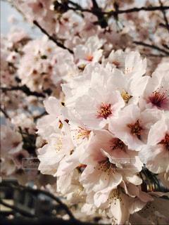 春 - No.423390