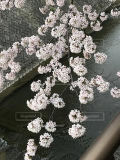 春 - No.423403