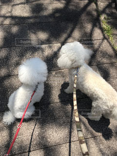 No.460706 犬