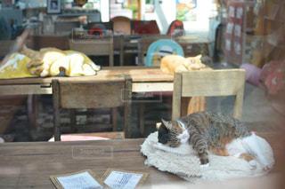 テーブルで眠る猫 - No.925591