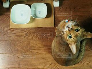 餌をねだる猫 - No.1006218