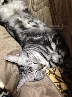 ベッドの上で横になっている猫 - No.1002827