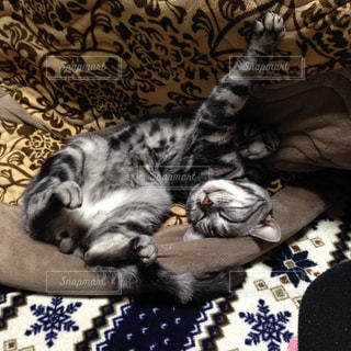 ベッドの上で横になっている猫の写真・画像素材[1006165]