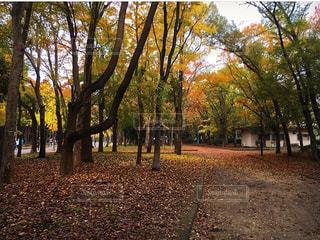 秋の写真・画像素材[371183]