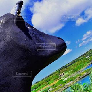 海,牛,沖縄,景色,旅行,宮古島,リゾート