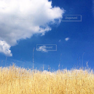 自然,風景,空,屋外,雲,青い空,黄色,景色,九州,草木,yellow