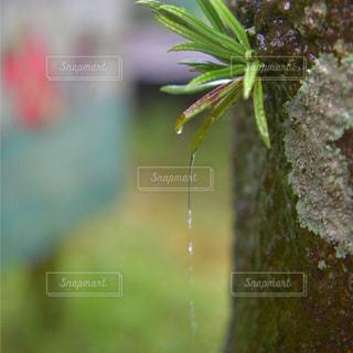 自然,風景,雨,屋外,緑,梅雨,天気,しずく,雨の日
