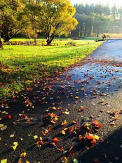秋の公園ランニングの写真・画像素材[758185]