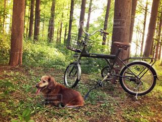 秋のおでかけサイクリングの写真・画像素材[758193]