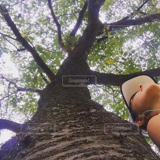 木の隣に立っている女性の写真・画像素材[1568318]