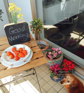 犬,文字,朝食,テラス,いちご,チョーク,メッセージ,モーニング,手書き,goodmorning,ダックスフンド