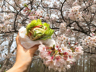 春の食欲の写真・画像素材[1869250]
