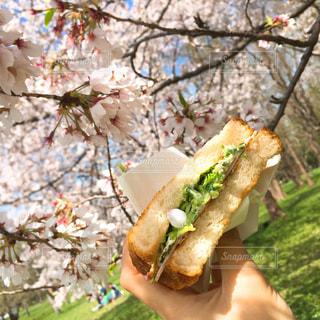 花びらサンドイッチの写真・画像素材[1872728]